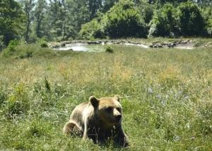So sieht ein Wunschplatz für alle Bären aus