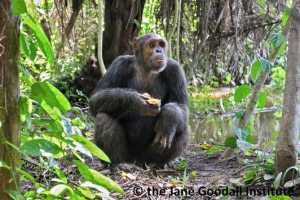 Kefan. Photo: Jane Goodall Institute