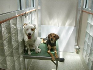 Two dogs waiting for the their forever home.