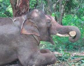 Photo: Animal Rajat