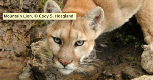 Photo: Cody S. Hoagland,Defenders of Wildlife