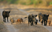 Photo: In Defense of Animals