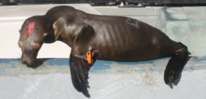 Photo: Marine Mammal Center