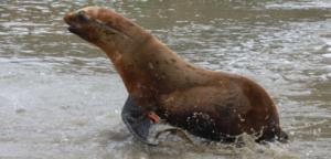 Photo: Marine Mammal Center