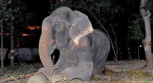 Photo: Wildlife SOS