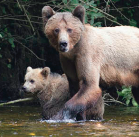 Photo: Center for Biological Diversity