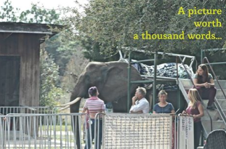 photo: Action for Nosey Now