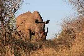 rhino-1077906__180