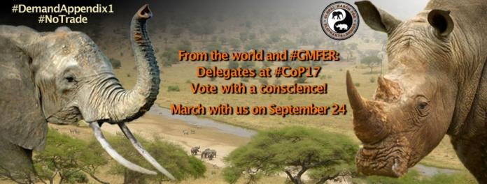 Elephant ivory tusk rhino horn poaching #GMFER delegates #CoP17 Johannesburg